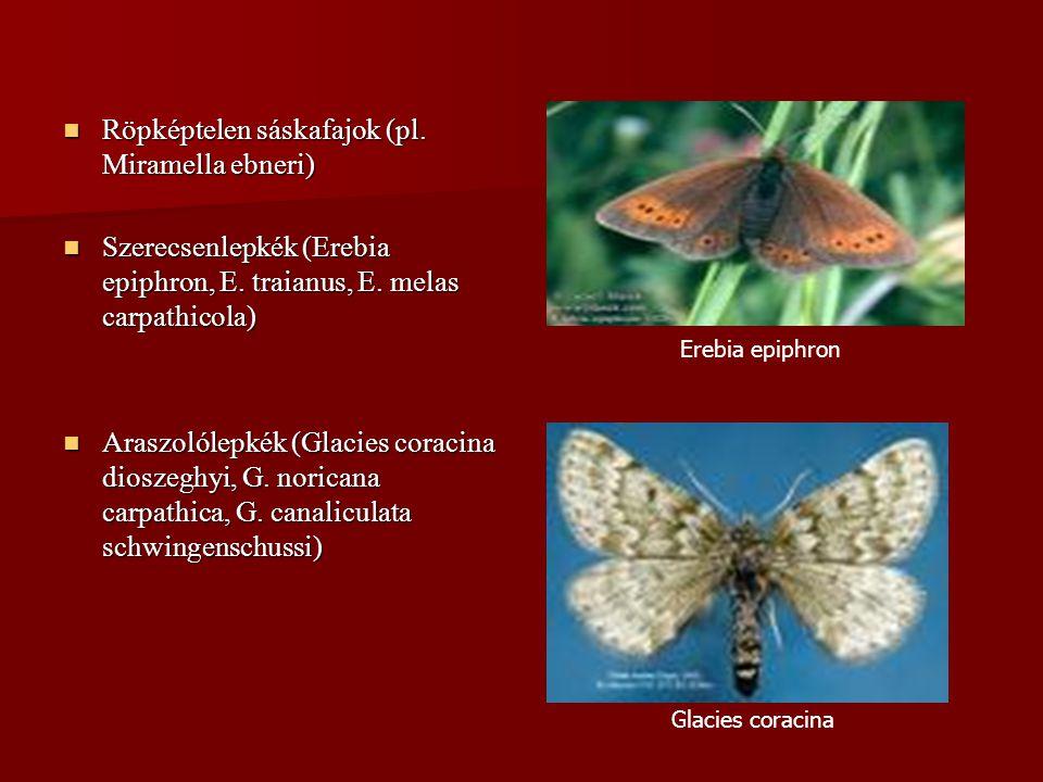 Röpképtelen sáskafajok (pl. Miramella ebneri)