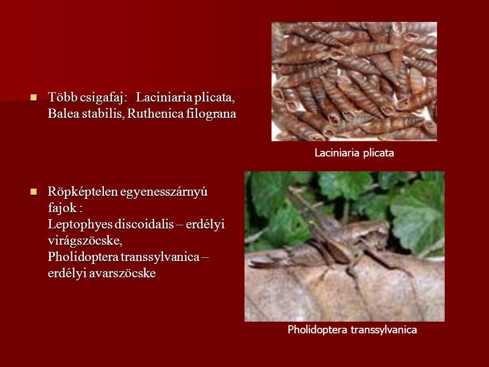 Több csigafaj: Laciniaria plicata, Balea stabilis, Ruthenica filograna