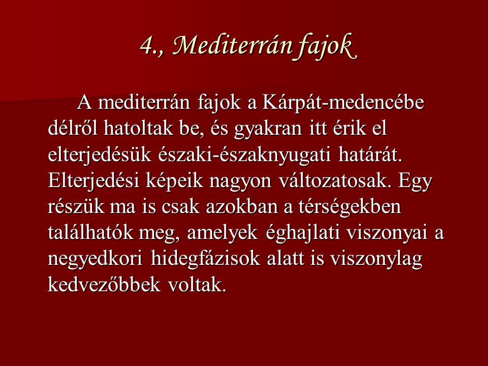 4., Mediterrán fajok