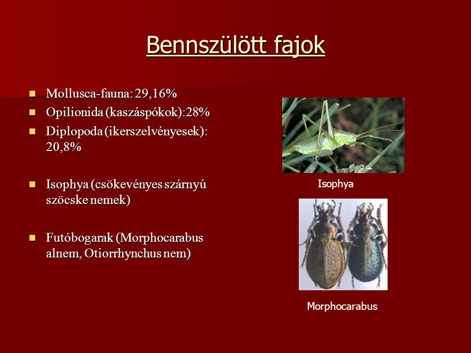 Bennszülött fajok Mollusca-fauna: 29,16% Opilionida (kaszáspókok):28%