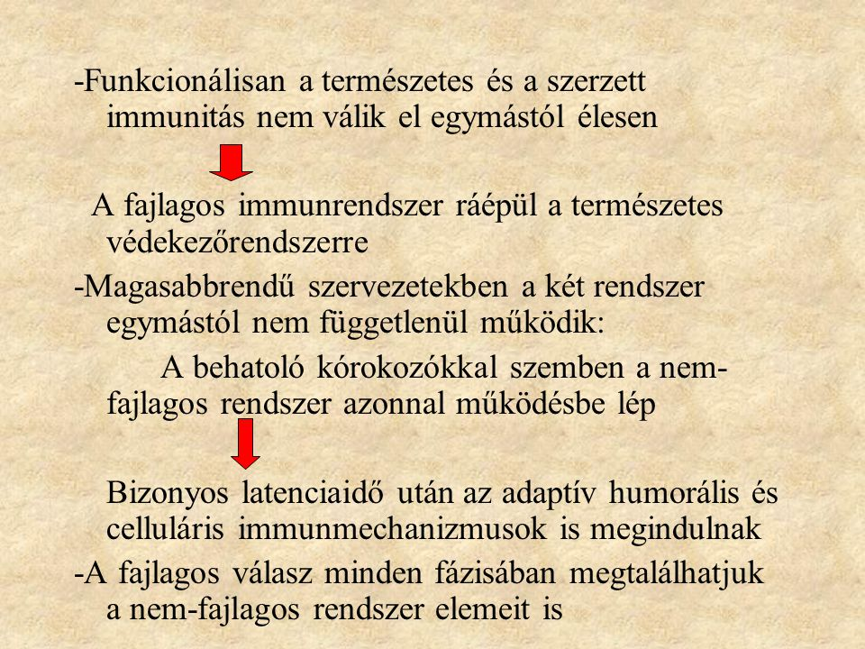 -Funkcionálisan a természetes és a szerzett immunitás nem válik el egymástól élesen