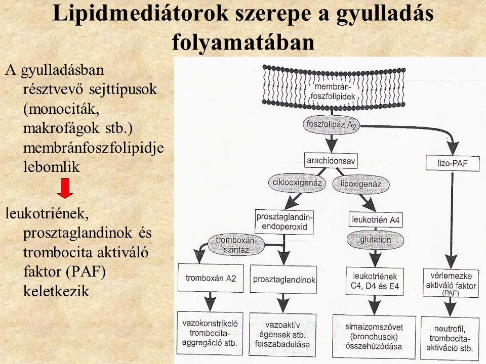 Lipidmediátorok szerepe a gyulladás folyamatában
