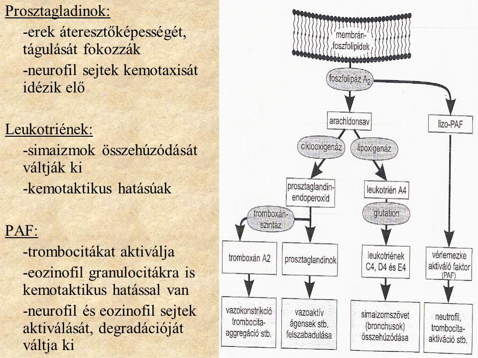 Prosztagladinok: -erek áteresztőképességét, tágulását fokozzák. -neurofil sejtek kemotaxisát idézik elő.