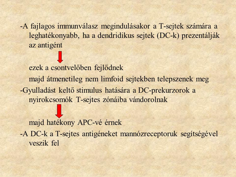 -A fajlagos immunválasz megindulásakor a T-sejtek számára a leghatékonyabb, ha a dendridikus sejtek (DC-k) prezentálják az antigént