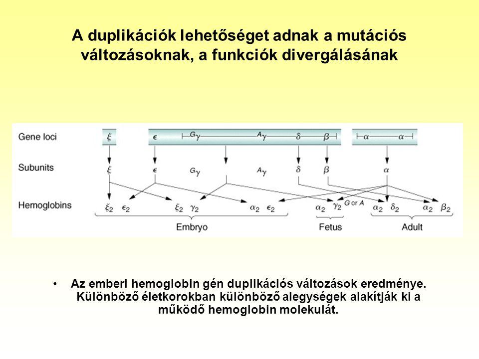 A duplikációk lehetőséget adnak a mutációs változásoknak, a funkciók divergálásának
