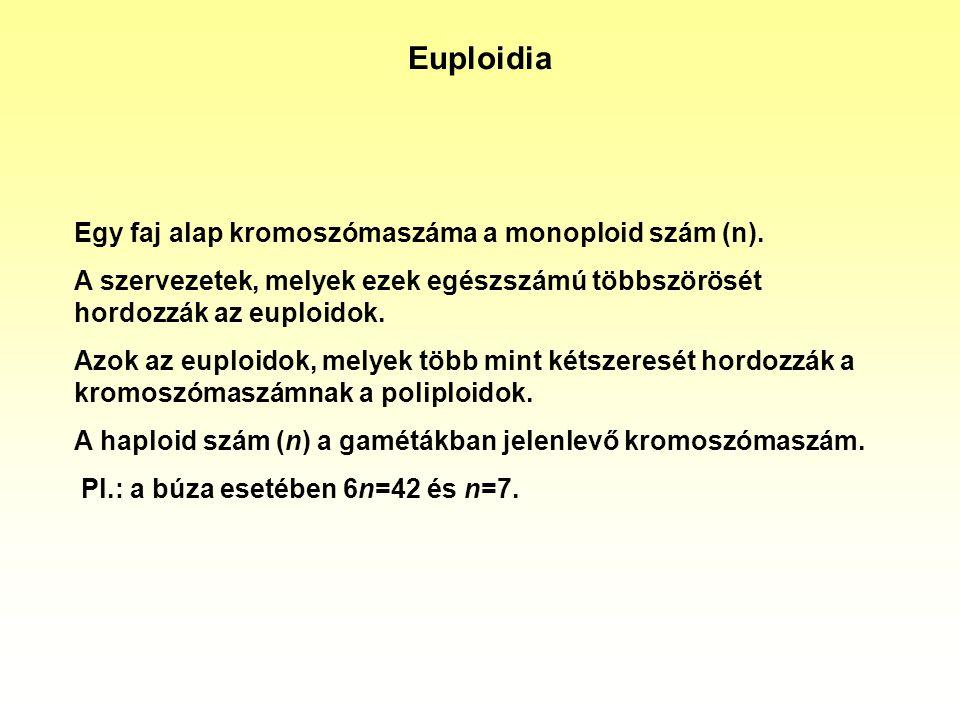 Euploidia Egy faj alap kromoszómaszáma a monoploid szám (n).