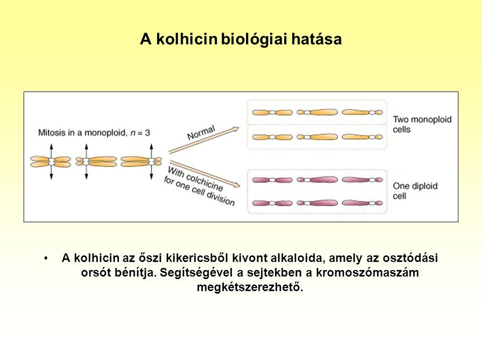 A kolhicin biológiai hatása