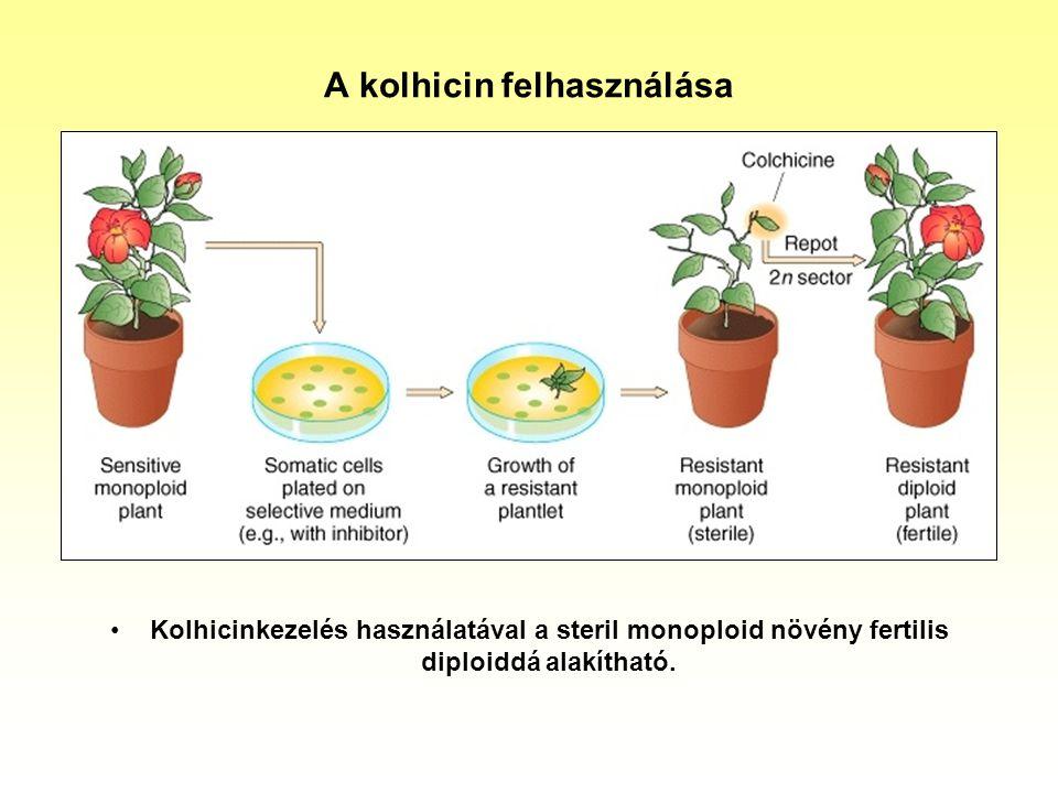 A kolhicin felhasználása