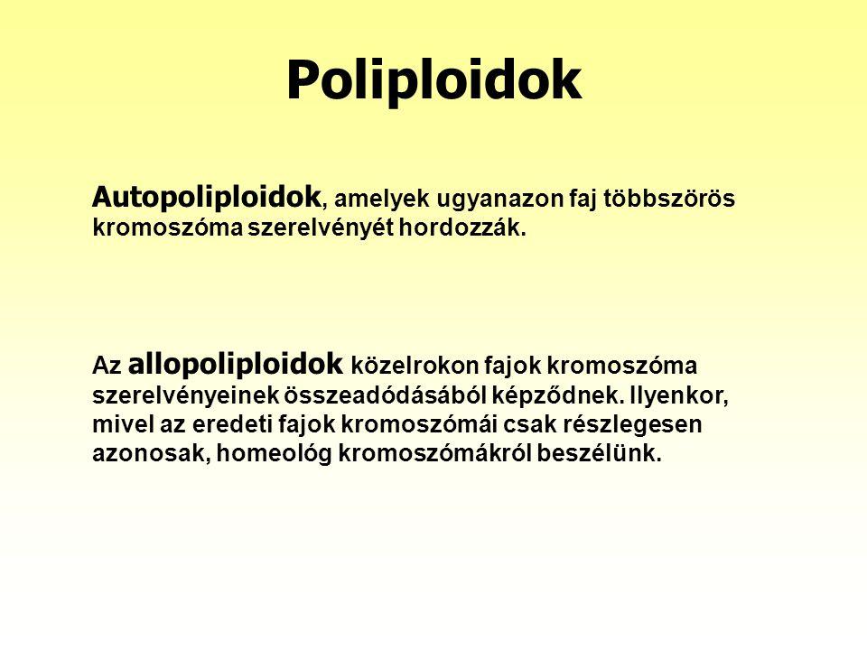 Poliploidok Autopoliploidok, amelyek ugyanazon faj többszörös kromoszóma szerelvényét hordozzák.