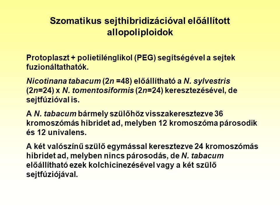 Szomatikus sejthibridizációval előállított allopoliploidok