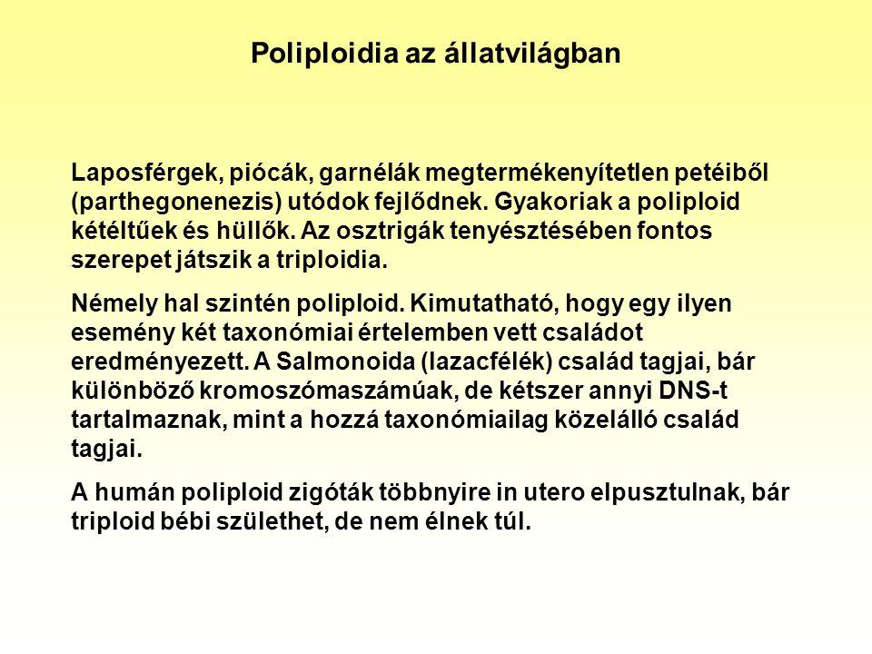 Poliploidia az állatvilágban