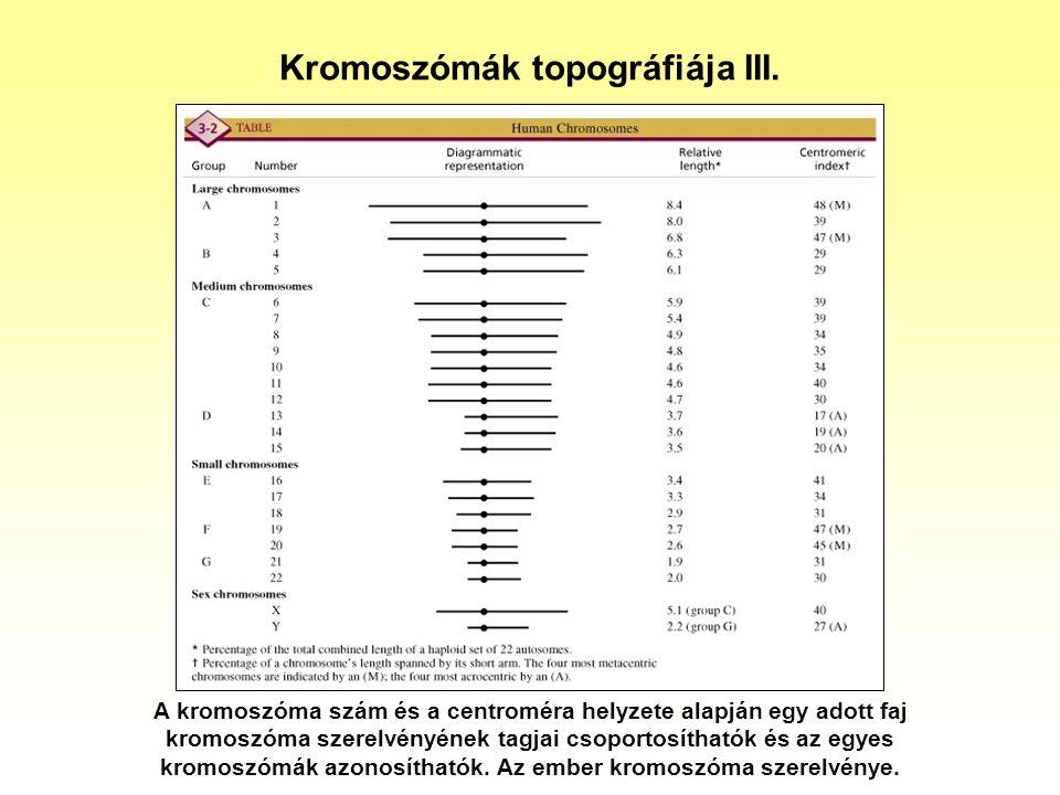 Kromoszómák topográfiája III.