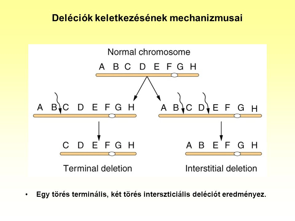 Deléciók keletkezésének mechanizmusai