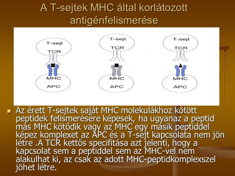 A T-sejtek MHC által korlátozott antigénfelismerése