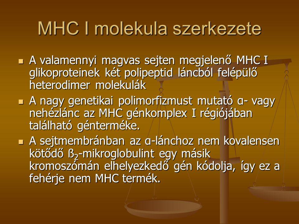 MHC I molekula szerkezete