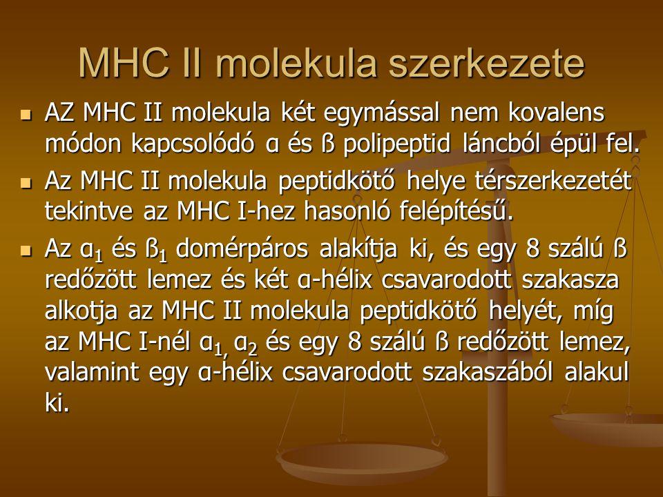 MHC II molekula szerkezete