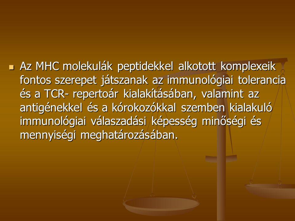 Az MHC molekulák peptidekkel alkotott komplexeik fontos szerepet játszanak az immunológiai tolerancia és a TCR- repertoár kialakításában, valamint az antigénekkel és a kórokozókkal szemben kialakuló immunológiai válaszadási képesség minőségi és mennyiségi meghatározásában.