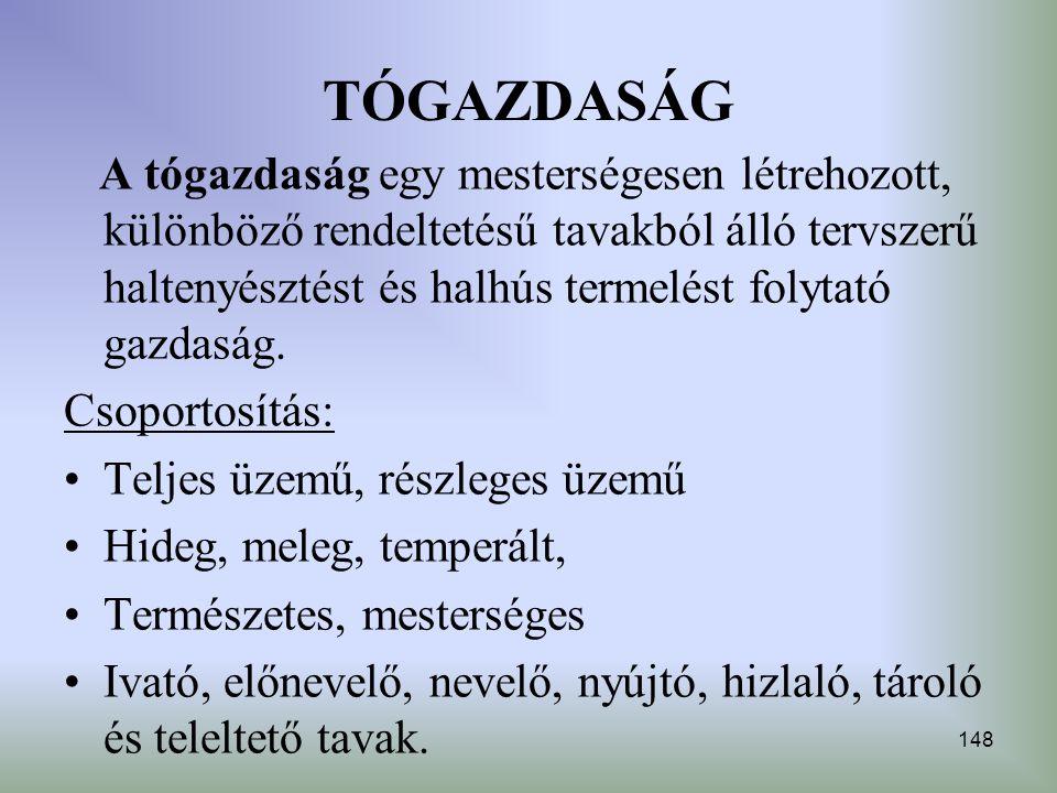 TÓGAZDASÁG