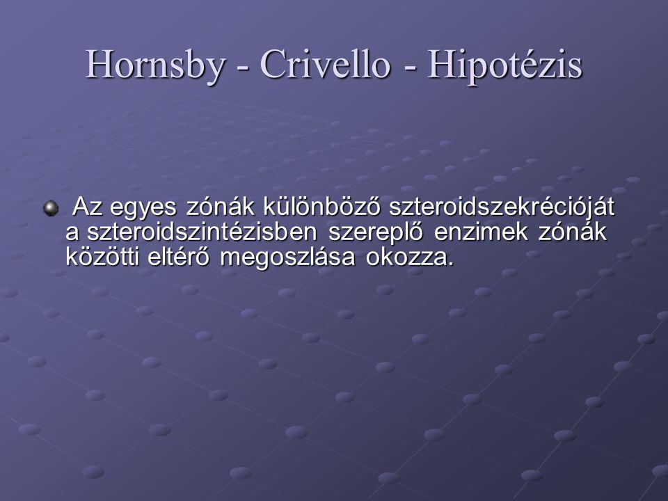 Hornsby - Crivello - Hipotézis