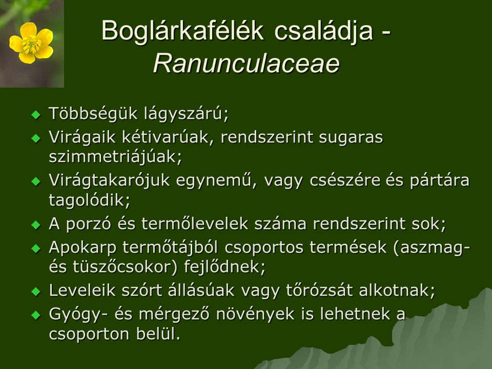Boglárkafélék családja - Ranunculaceae