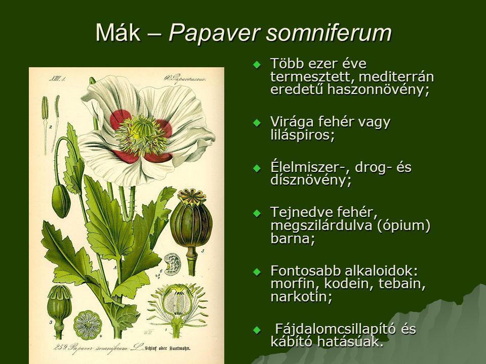 Mák – Papaver somniferum