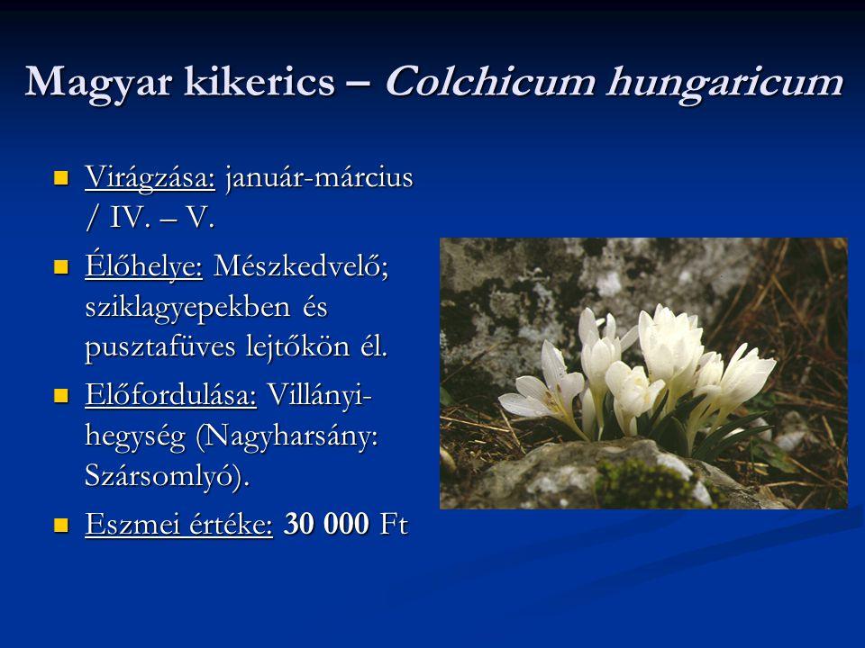 Magyar kikerics – Colchicum hungaricum