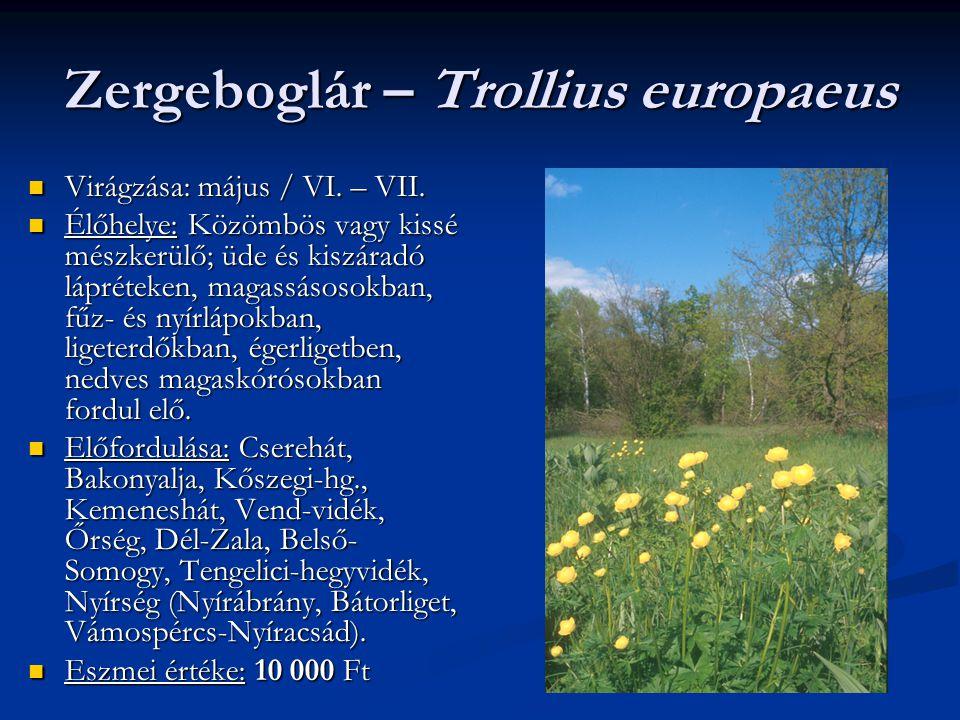 Zergeboglár – Trollius europaeus