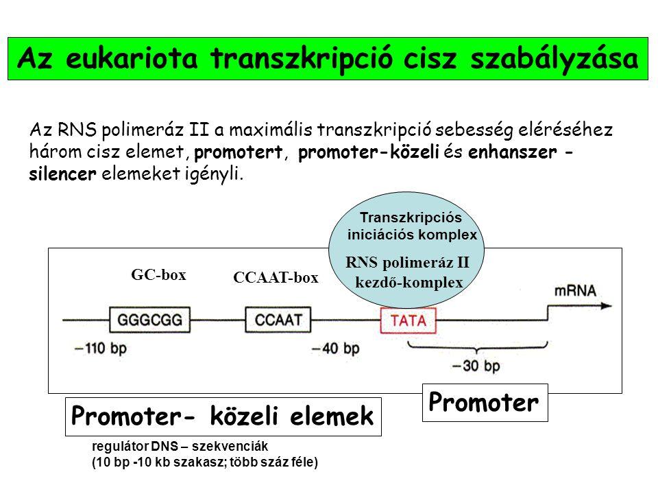 Az eukariota transzkripció cisz szabályzása