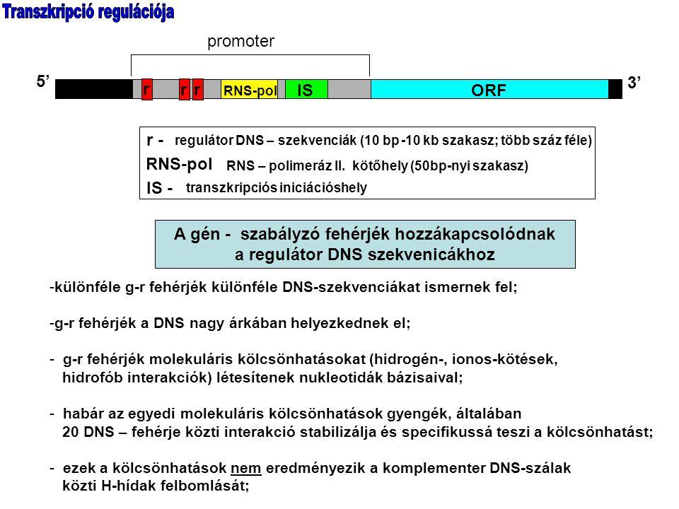 Transzkripció regulációja