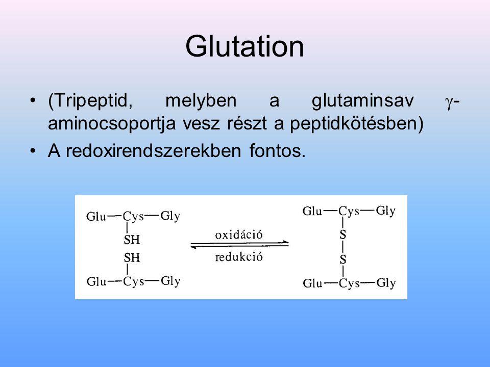Glutation (Tripeptid, melyben a glutaminsav -aminocsoportja vesz részt a peptidkötésben) A redoxirendszerekben fontos.