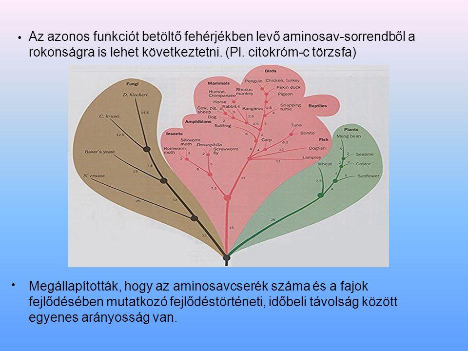 Az azonos funkciót betöltő fehérjékben levő aminosav-sorrendből a rokonságra is lehet következtetni. (Pl. citokróm-c törzsfa) Megállapították, hogy az aminosavcserék száma és a fajok fejlődésében mutatkozó fejlődéstörténeti, időbeli távolság között egyenes arányosság van.