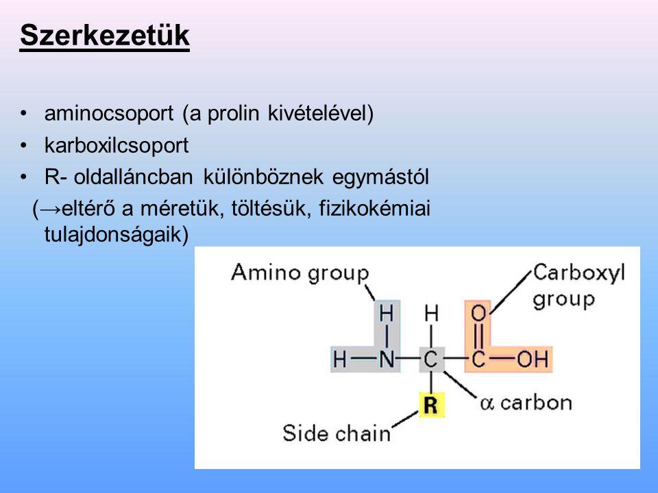 Szerkezetük aminocsoport (a prolin kivételével) karboxilcsoport
