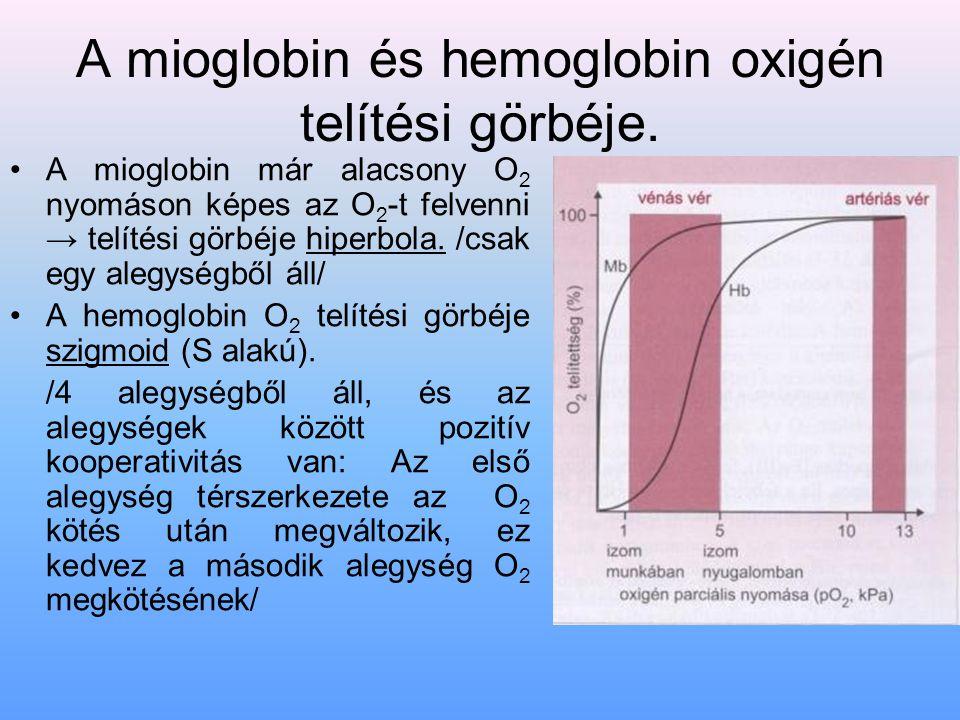 A mioglobin és hemoglobin oxigén telítési görbéje.