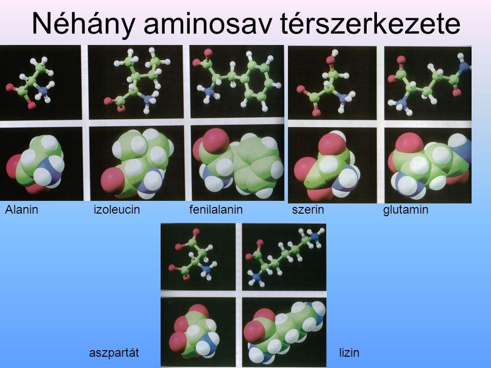 Néhány aminosav térszerkezete