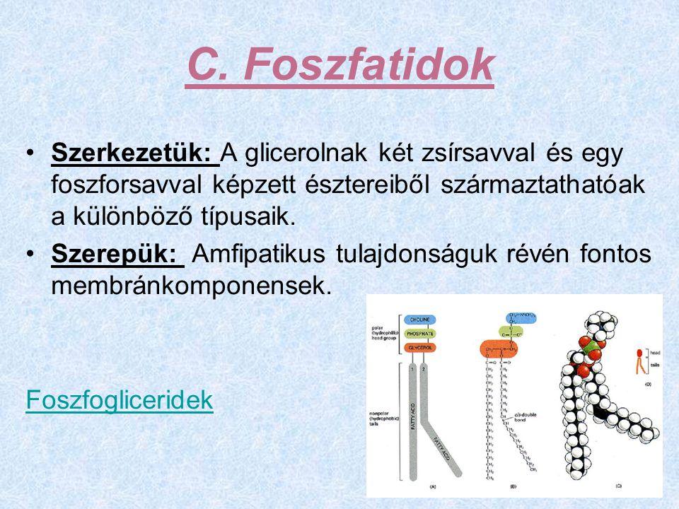 C. Foszfatidok Szerkezetük: A glicerolnak két zsírsavval és egy foszforsavval képzett észtereiből származtathatóak a különböző típusaik.