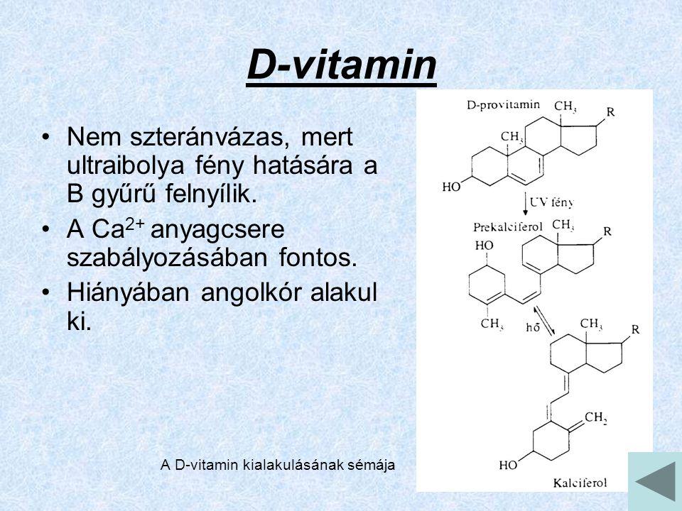D-vitamin Nem szteránvázas, mert ultraibolya fény hatására a B gyűrű felnyílik. A Ca2+ anyagcsere szabályozásában fontos.