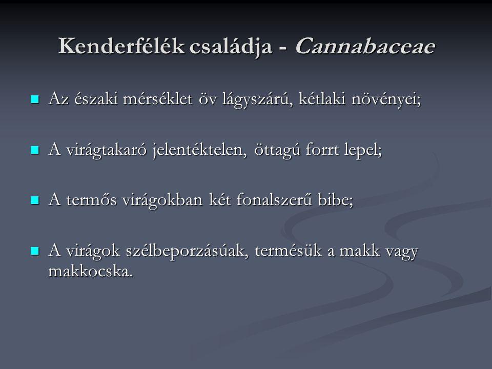 Kenderfélék családja - Cannabaceae