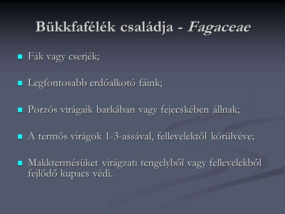 Bükkfafélék családja - Fagaceae