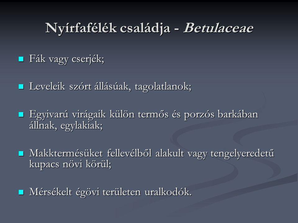 Nyírfafélék családja - Betulaceae