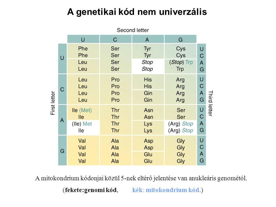 A genetikai kód nem univerzális