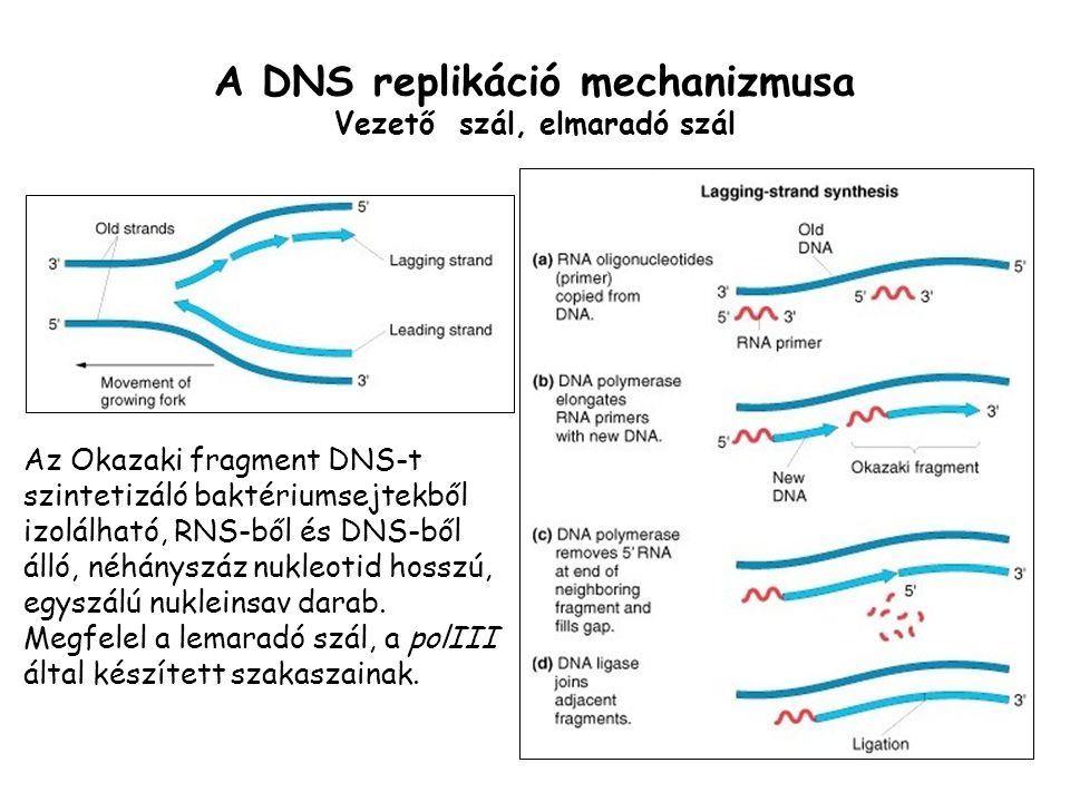 A DNS replikáció mechanizmusa Vezető szál, elmaradó szál
