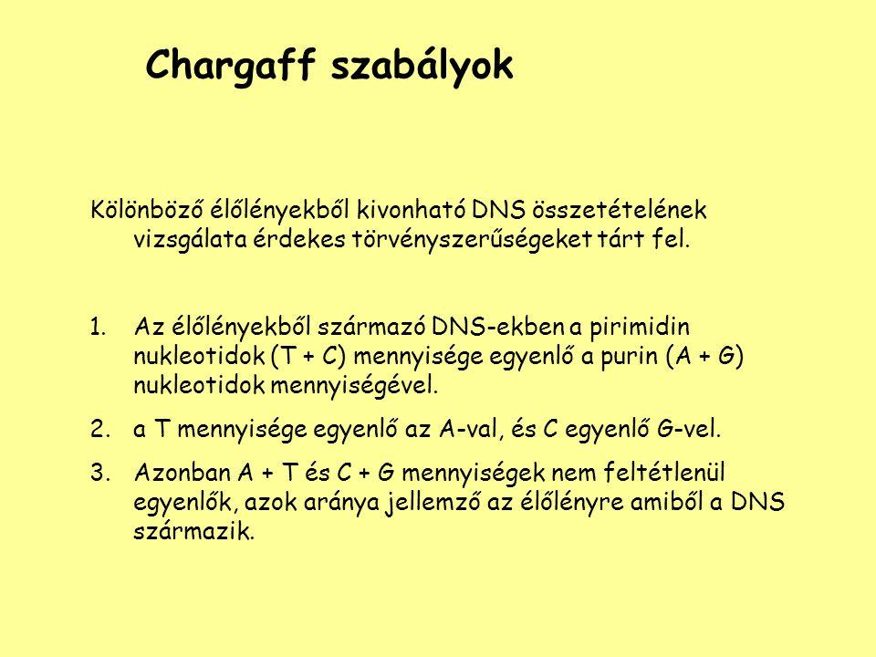 Chargaff szabályok Kölönböző élőlényekből kivonható DNS összetételének vizsgálata érdekes törvényszerűségeket tárt fel.