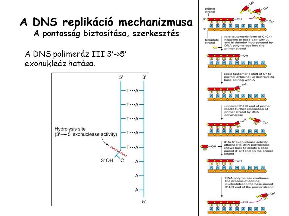 A DNS replikáció mechanizmusa A pontosság biztosítása, szerkesztés