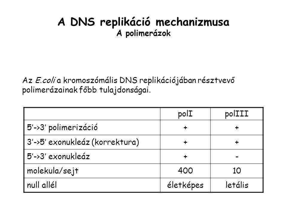 A DNS replikáció mechanizmusa A polimerázok