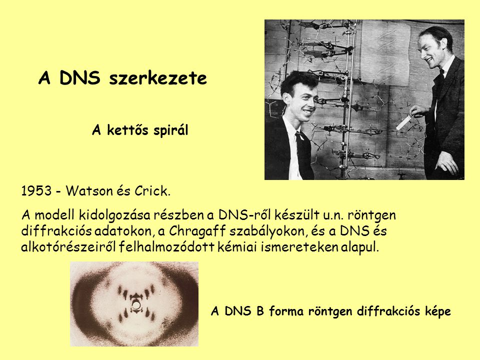 A DNS B forma röntgen diffrakciós képe