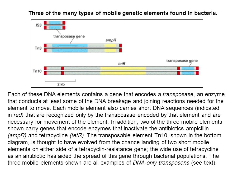 Three of the many types of mobile genetic elements found in bacteria.