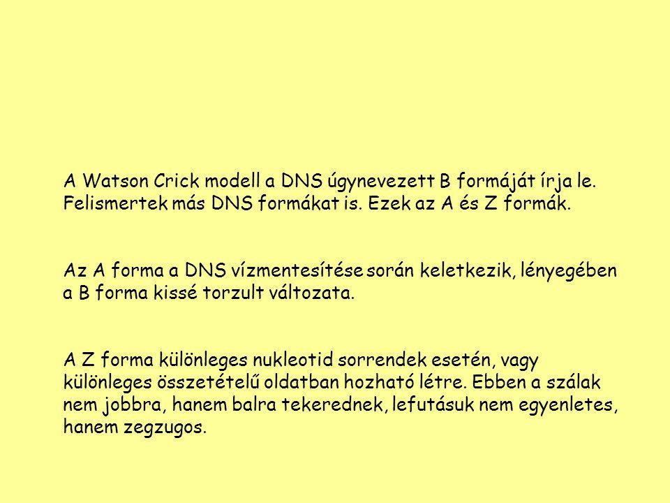 A Watson Crick modell a DNS úgynevezett B formáját írja le