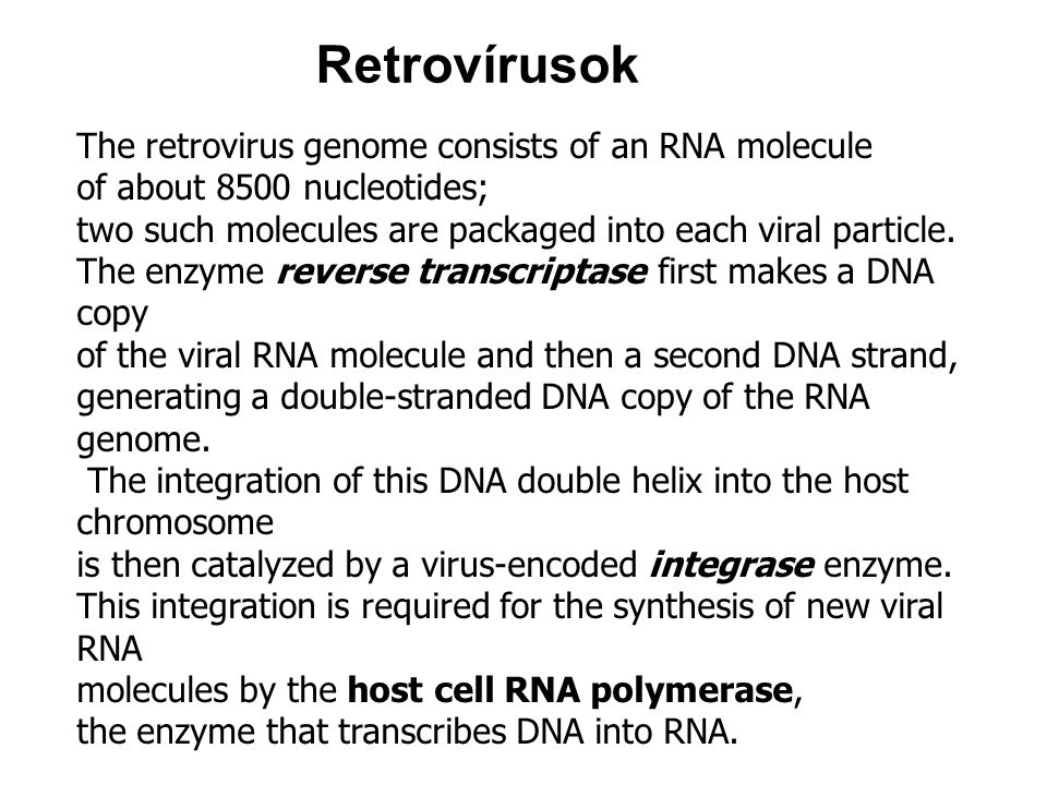 Retrovírusok The retrovirus genome consists of an RNA molecule