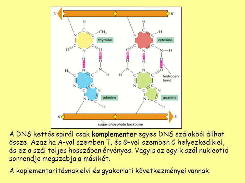 A DNS kettős spirál csak komplementer egyes DNS szálakból állhat össze