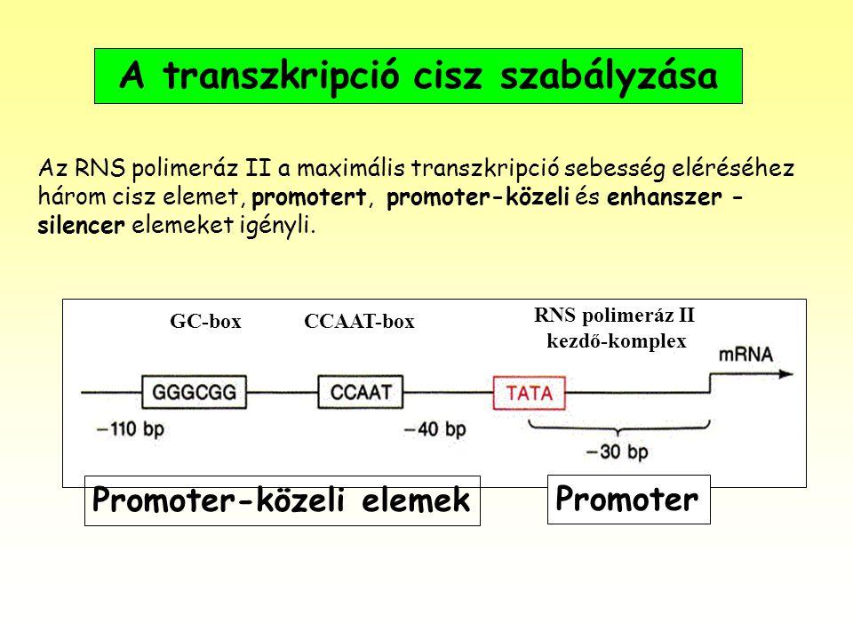 A transzkripció cisz szabályzása